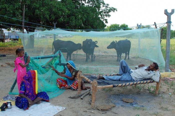 Живот в Индия