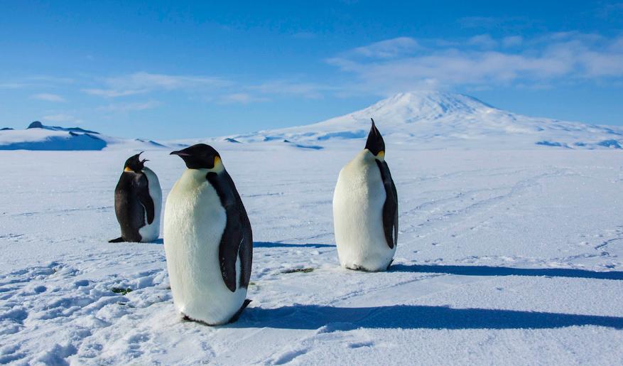 Да се заселиш на Антарктида