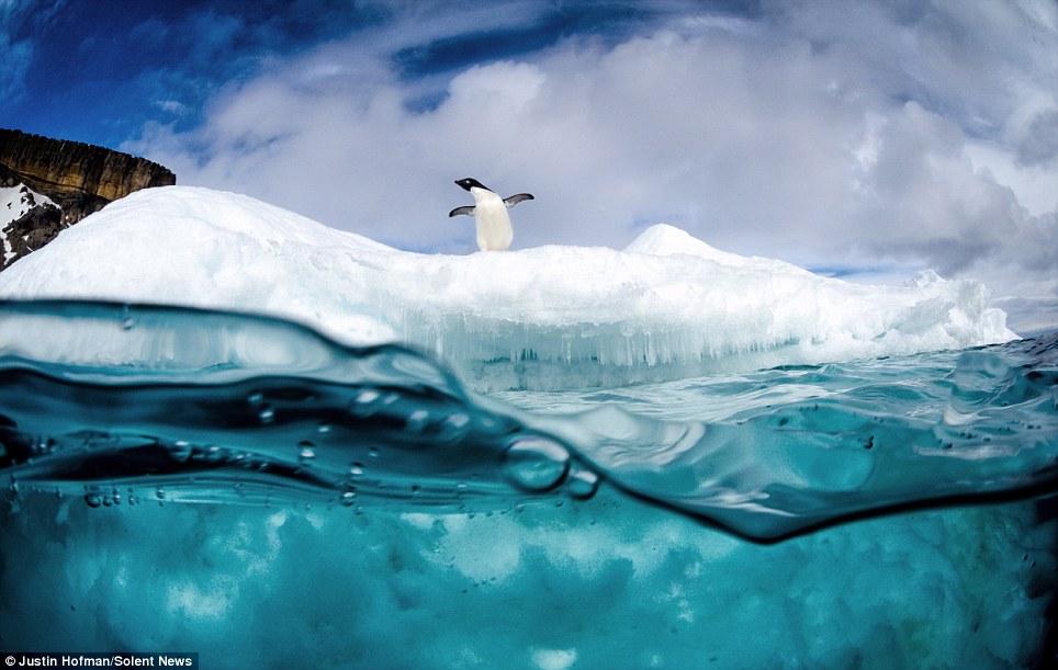 Да се гмурнеш под леда!