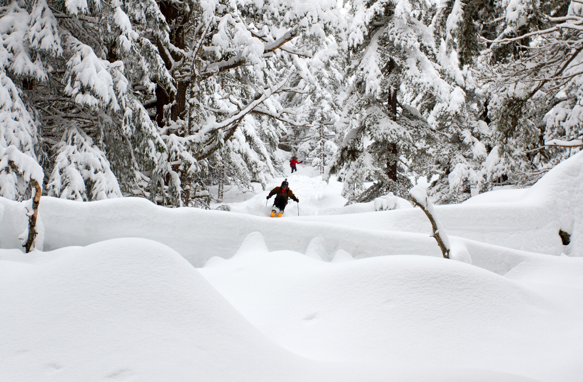 Skiing_Powder