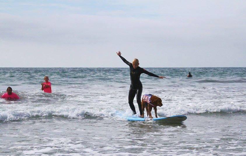 Кучета сърфисти
