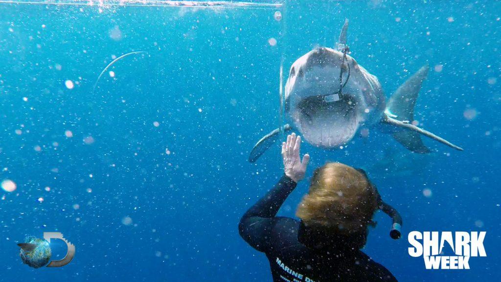 Седмица на акулите