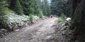 Пътят към хижа Демяница