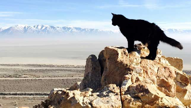 Котки катерачи