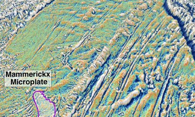 микроплоча Мамерикс