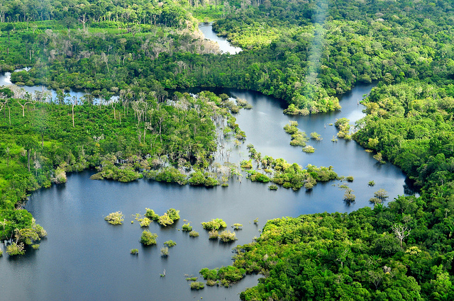 the-amazon-rainforest