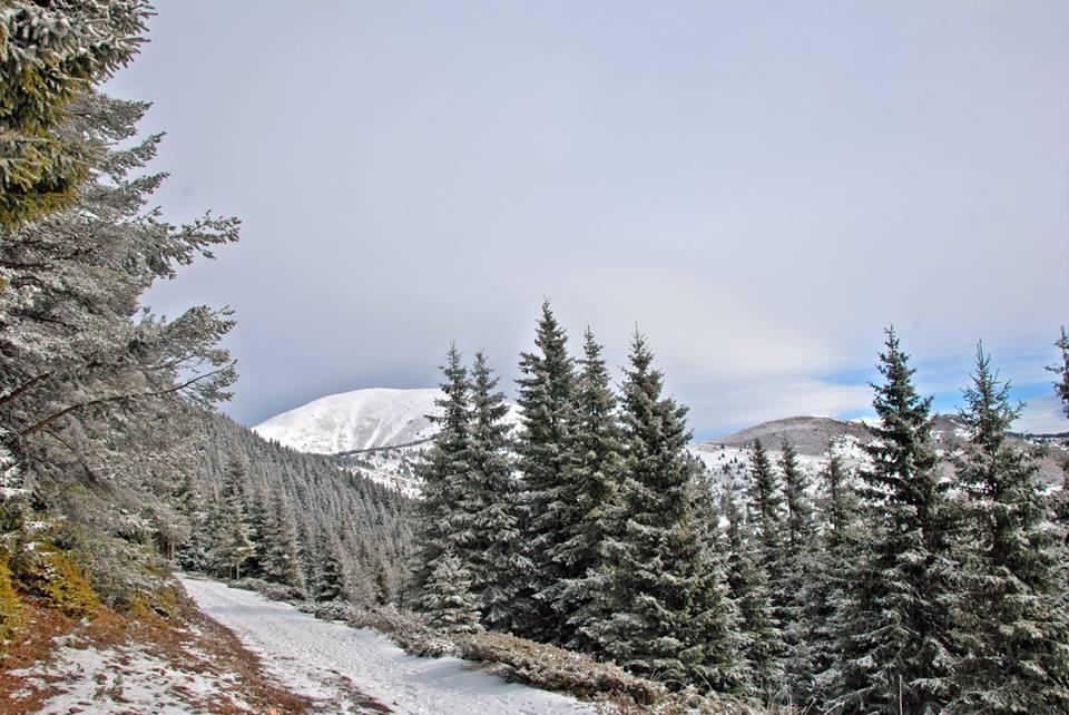 Снежен прешлен от гръбнака на Балкана. Снимка: Гергана Ганчева