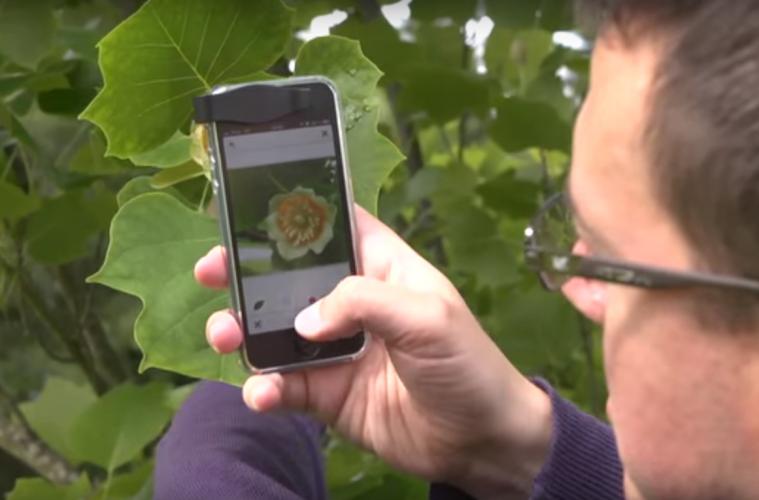 Shazam за растения