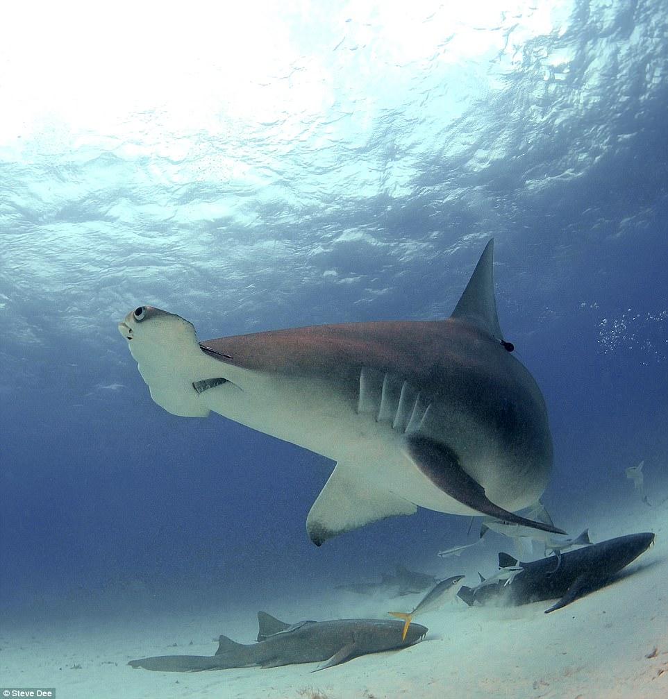 Акули в близък план