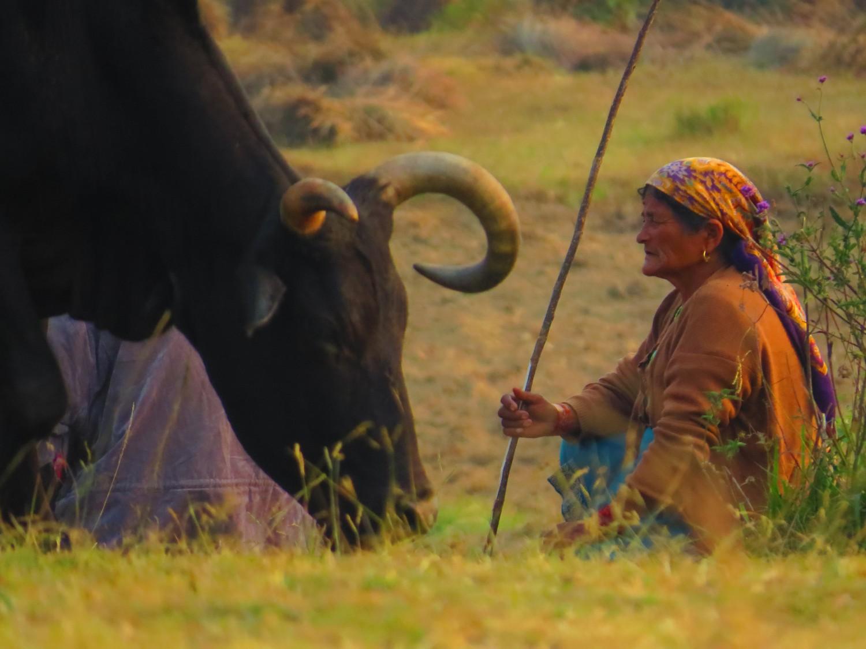 Бир Тибетска колония, автор: Ира Кюрпанова