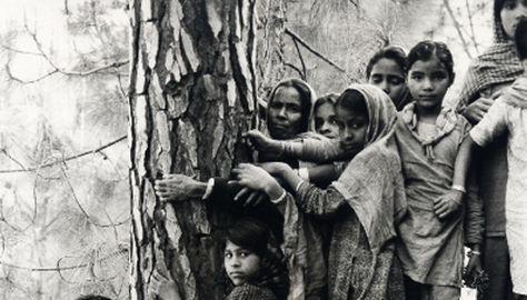 Прегърни дърво, спаси дърво