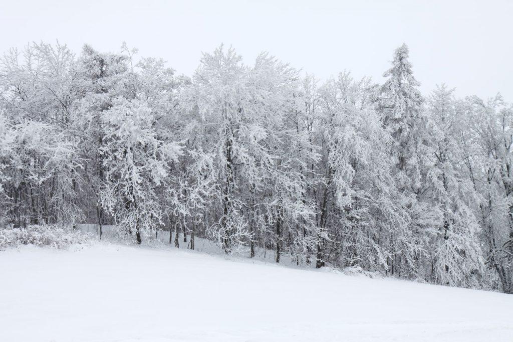 Сняг, дървета