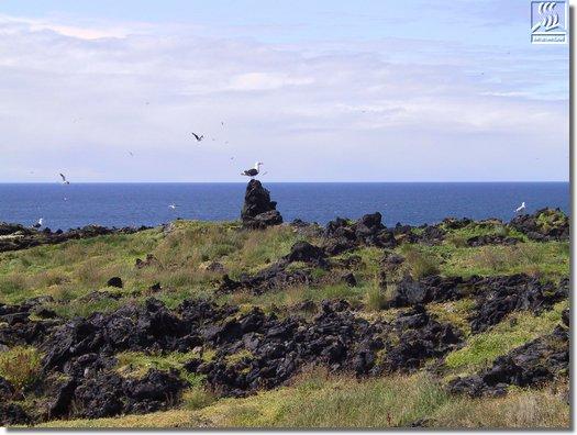Забраненият остров Сюртсей