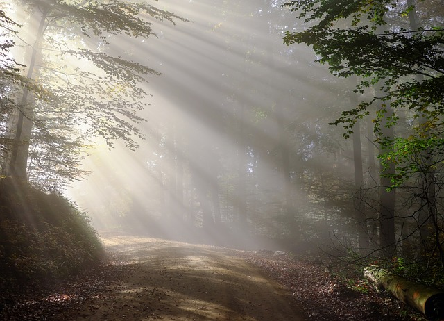 21 март световен ден на горите