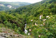 Екопътека Бяла река