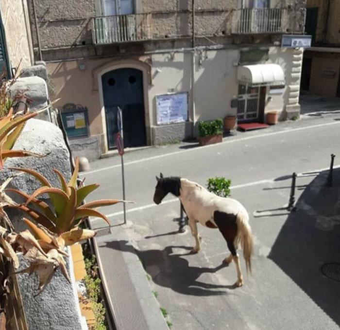 В Италия, свободно разхождащите се коне не са необичайна гледка Кадър: dopo-magari-lo-cambio
