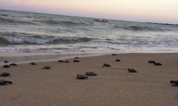 морски костенурки