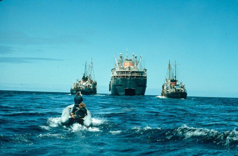 """Лодката на """"Грийнпийс"""" се приближава към руската китоловна флотилия """"Данилов Восток"""" и лодките с харпуни. Северен Тихи океан. © Greenpeace / Rex Weyler"""