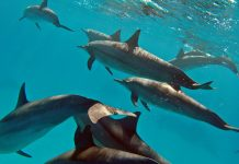 делфин